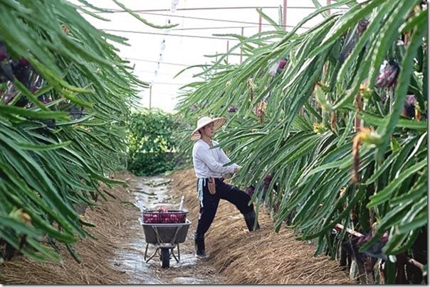 台南好年小農