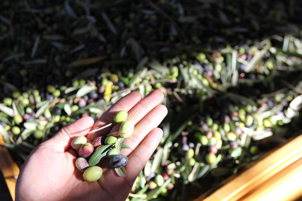 澳根尼特級初榨橄欖油