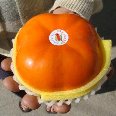 南投仁愛 古大哥高山甜柿