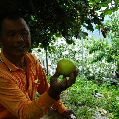 台中梨山 寬伯的水蜜桃